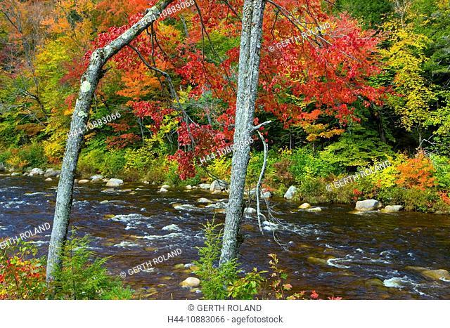 Swift River, USA, Amerika, Vereinigte Staaten, New Hampshire, White Mountain, Fluss, Bäume, Wald, Verfärbung, Indian Summer, Her