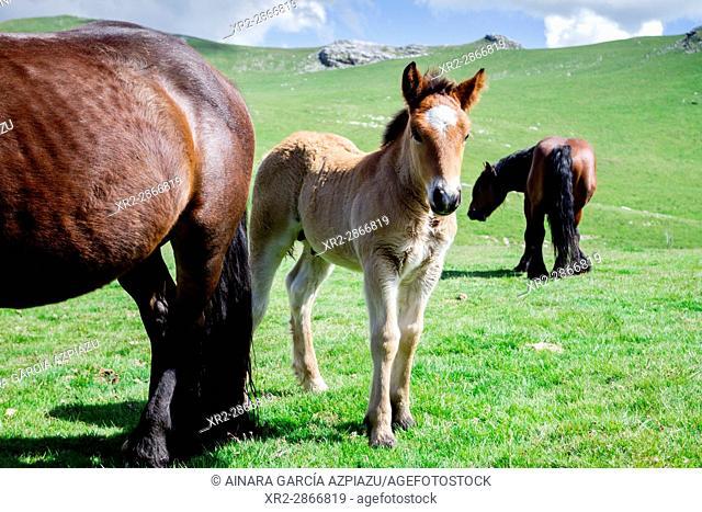 Horses, near Txindoki mountain, Gipuzkoa, Basque Country