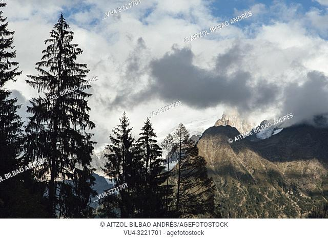 Trees around Chamonix Mont Blanc, French Alps. The glacier goes down from the mountain down to the valley