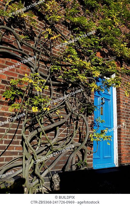 Ivy climbing on the front elevation of a Victorian cottage