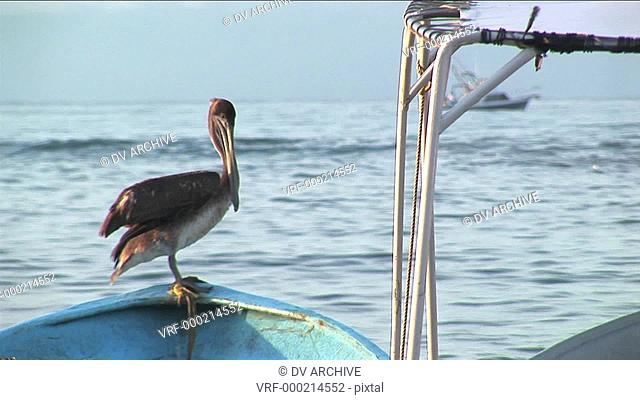 A pelican stands on the bow of a rowboat floating in water