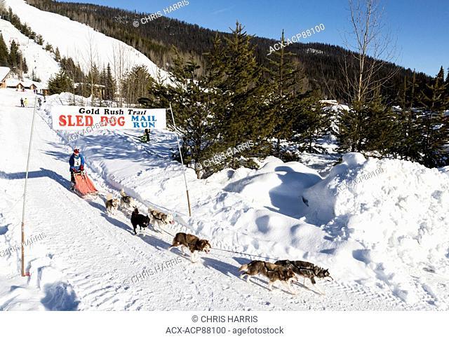 British Columbia, Canada, Gold Rush Dog Sled Mail Run, Barkerville Area, North Cariboo region, dog sled