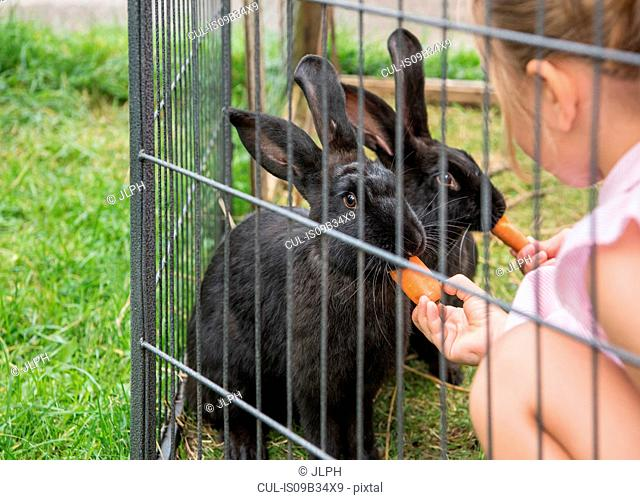Children feeding rabbits with carrots