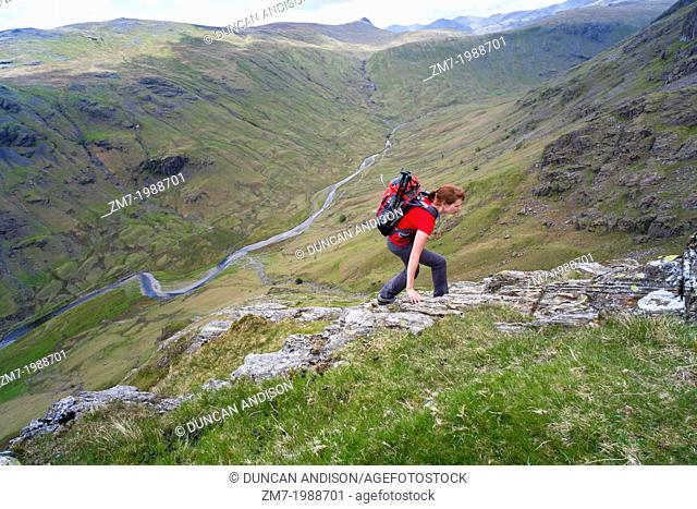 A hiker climbing Cam Crag Ridge in the Langstrath valley leading to the summit of Glaramara in the Lake District, Cumbria