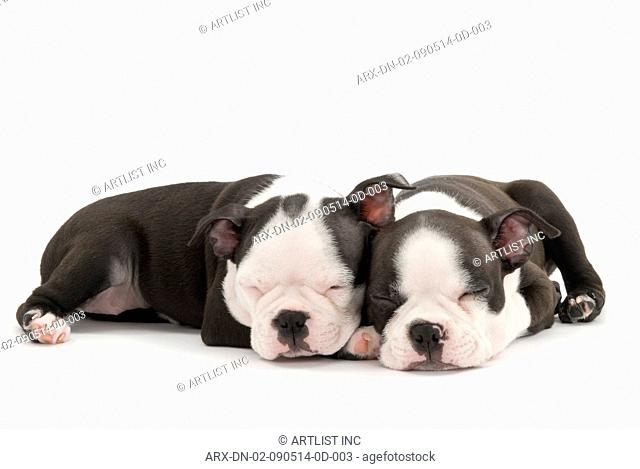 Two sleeping puppies snuggling up