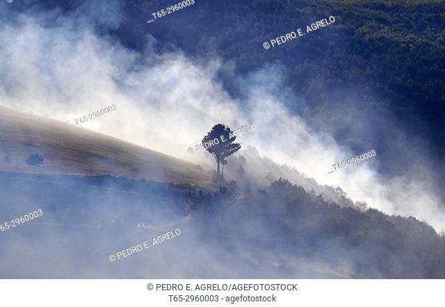 Forest fires in Galicia, on the mountain of the Ancares in Lugo. Galicia, Spain