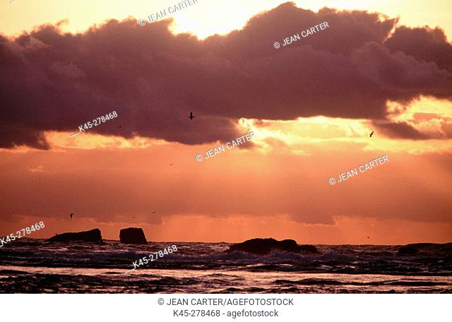 Sunset over Pacific Ocean with gullas and God beams, Bandon, Southern Oregon Coast, USA