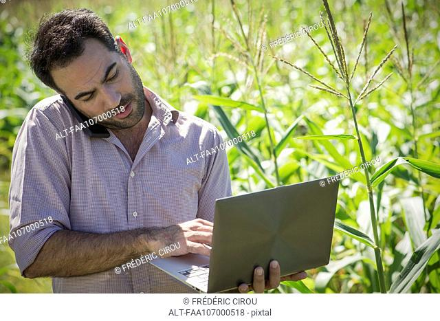 Scientist using laptop computer while talking on cell phone in cornfield