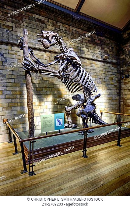 Skeleton of the extinct giant ground sloth Megatherium americanum at the Natural History Museum, London