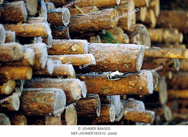 Piled of firewood