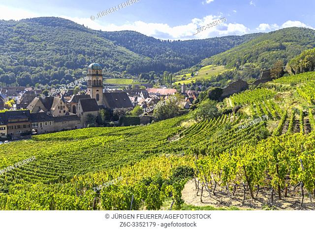 town Kaysersberg in the middle of vineyards, Alsace Wine Route, France, foothills of the Vosges mountains
