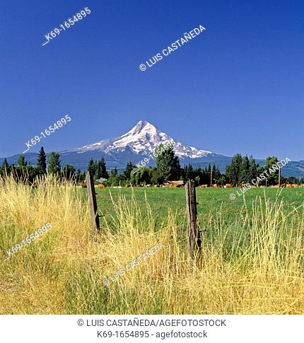 Mount Hood, called Wy'east by the Multnomah tribe, is a stratovolcano in the Cascade Volcanic Arc of northern Oregon  It was formed by a subduction zone and...