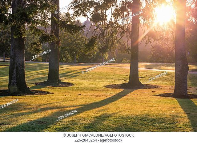 Sunrise with pine trees in a park setting. Balboa Park, San Diego, California, USA