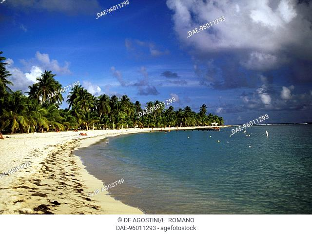 Palm trees along Caravelle beach at Sainte-Anne, Grande-Terre island, Guadeloupe, Overseas department of the French Republic