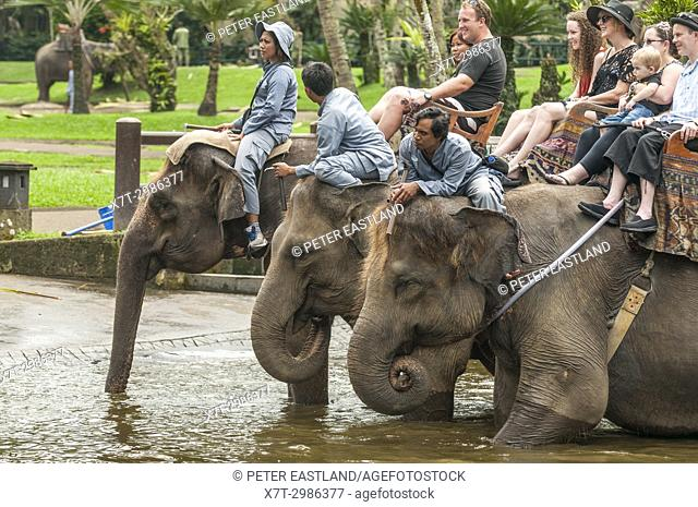 Tourists and handlers riding rescued Sumatran elephants at the Elephant Safari Park at Taro, Bali, Indonesia