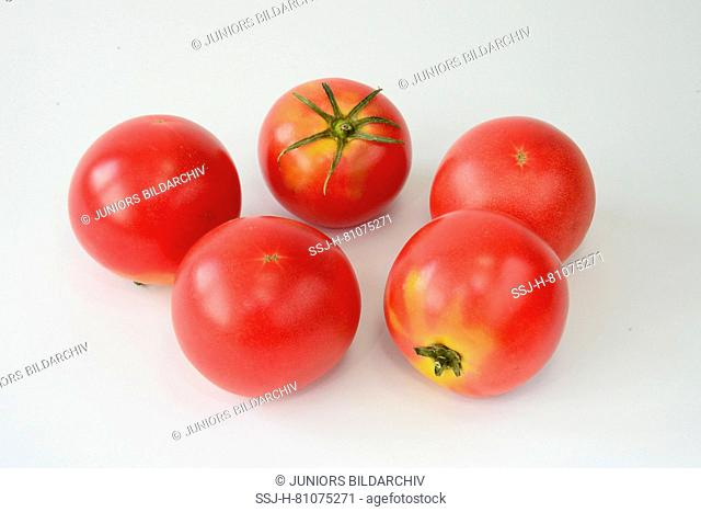 Tomato (Solanum lycopersicumm), variety: Berner Rose, Bernese Rose. Five ripe fruit. Studio picture against a white background