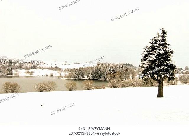 schnee bedeckte winter landschaft wald natur