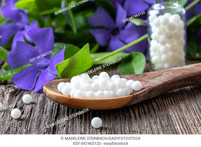 Homeopathic pills on a spoon with fresh Vinca minor plant in the background