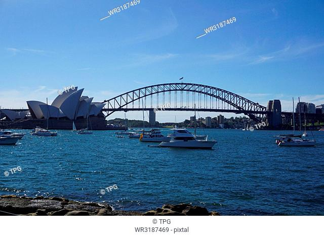 Sydney at the day