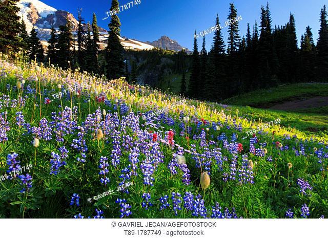 Wild flowers at Mt Rainier National Park