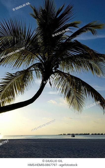 Maldives, Alifu Dhaalu Atoll, Velavaru Island, beach of Angsana Velavaru resort hotel by Banian Tree company