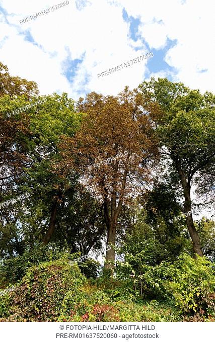 Trees at Barterode, Flecken Adelebsen, Naturraum Sollingvorland, Landkreis Göttingen, Niedersachsen, Germany, HDR / Bäume in Barterode, Flecken Adelebsen