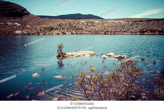 Lagoon Long Leaf, Cocuy of the Sierra Nevada, Boyaca, Tunja, Colombia, South America