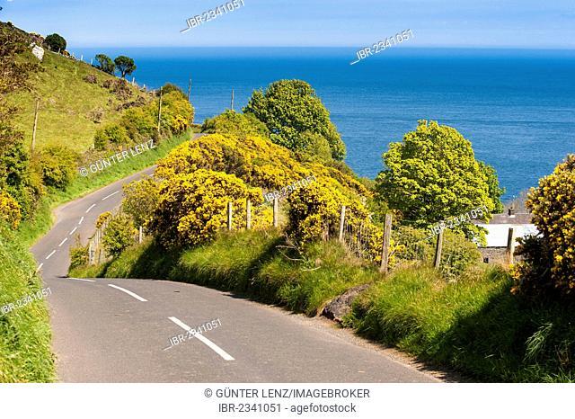 Winding coastal road to Torr Head, Cushendun, Northern Ireland, United Kingdom, Europe