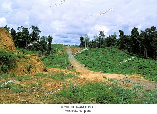 Oilpalm plantation, rainforest