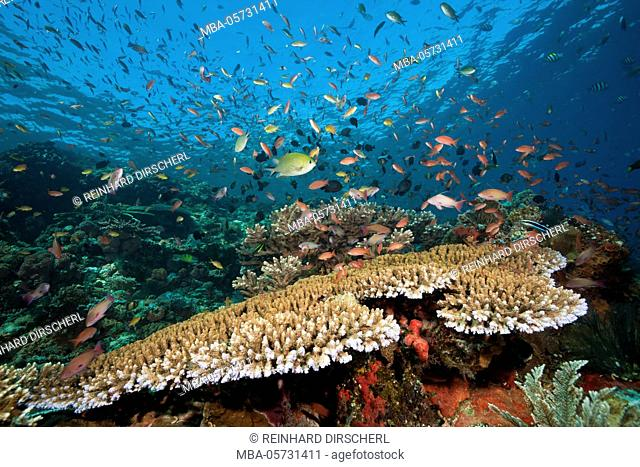 Colored Reef Top, Komodo National Park, Indonesia