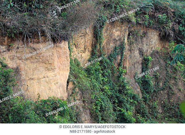 Soil erosion and vegetation, Altos de Pipe, Caracas, Venezuela