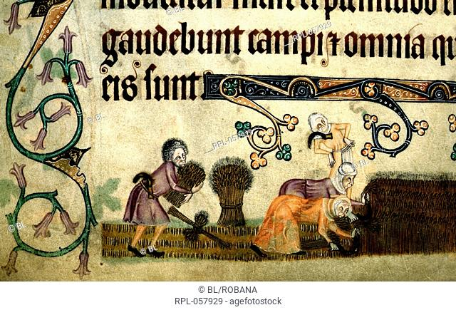 Reaping and binding sheaves Detail Lower margin. A harvest field. Two women bending forward reap with sickles, on left is a bound sheaf while a man with a...