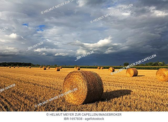 Pressed straw bales in a field with an approaching thunderstorm, Marckolsheim, Alsace, France, Europe