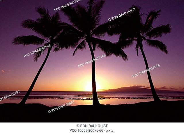 Hawaii, Palm trees silhouetted by purple and yellow sunset sky over ocean