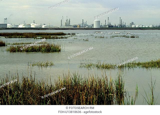 Oil Refinery on Bay with Pelicans in Water in Foreground