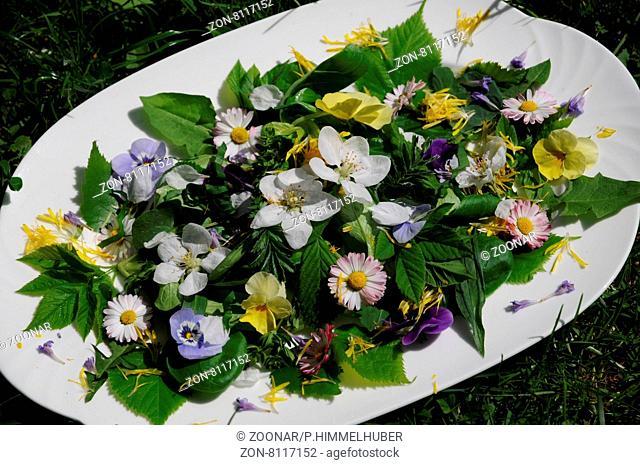 Salat aus Blatt-Arten, Kräutern, Blüten