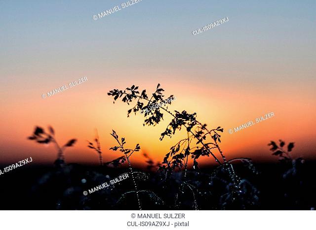 Rural scene at sunset, Neulingen, Baden-Wurttemberg, Germany