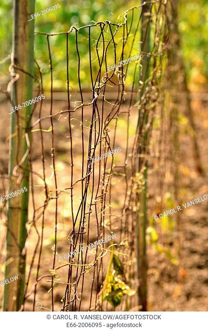 Close-up of wire fence surrounding a community garden in Heerlen, Limburg, the Netherlands