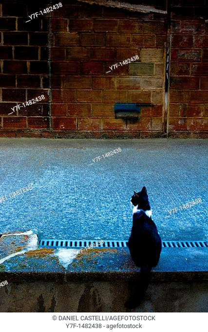 Cat on the Courtyard