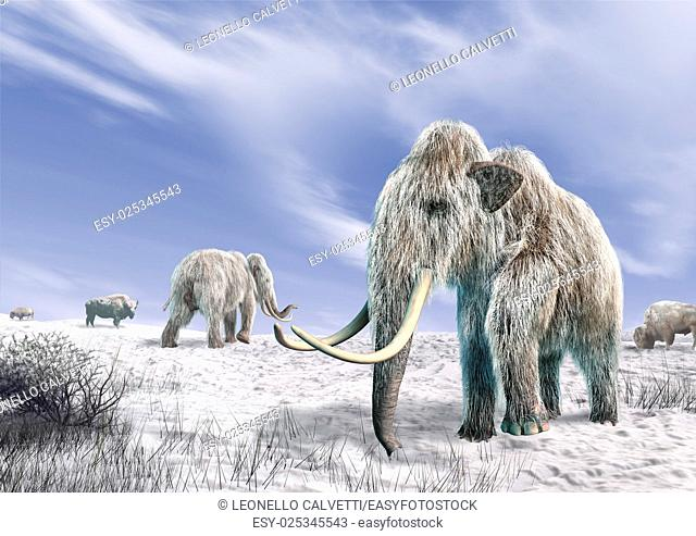 Two mammoth in a field covered of snow, with some bushes and a few bisons. Blue sky with clouds in the background