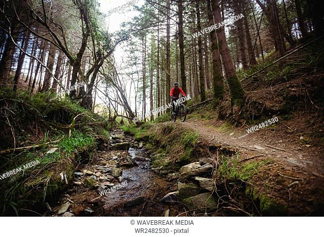 Mountain biker riding by stream in forest