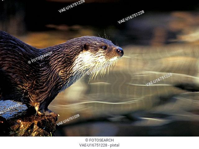 animals, CLOSE, brown, aichner