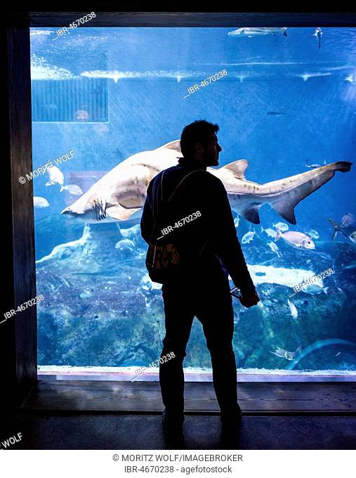 Person in front of an aquarium with a Shark (Selachimorpha), Sevilla, Spain