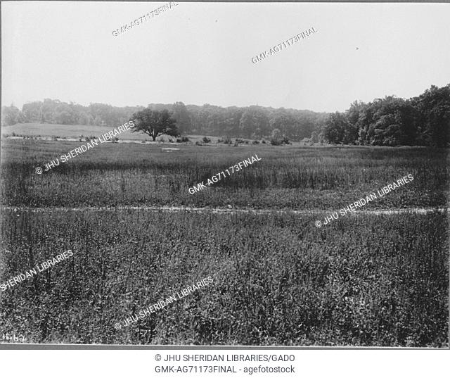 View of untouched land near Roland Park and Guilford, the grass is unmaintained and there are weeds growing, there are trees in the far background, Baltimore