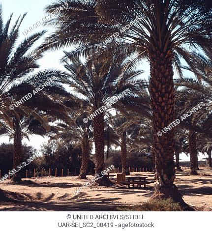 Im Kibbuz Yotrata, Israel 1970er. In the Yotrata Kibbutz, Israel 1970s