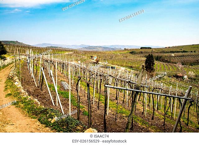 vineyards on the hills in spring, Soave, Italy