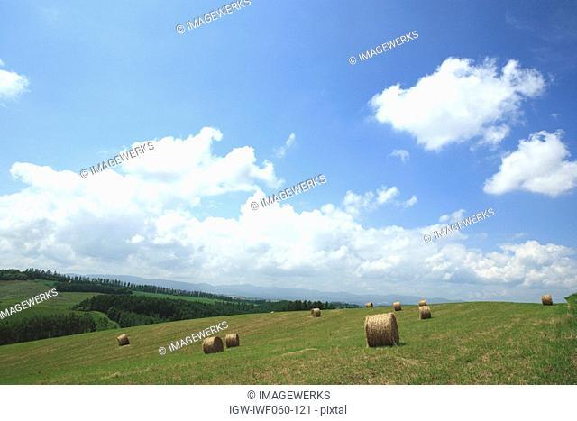 Japan, Hokkaido, Biei, Hay bales in field