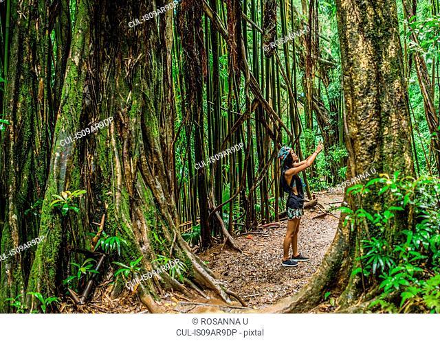 Young female tourist photographing on smartphone in jungle, Manoa Falls, Oahu, Hawaii, USA