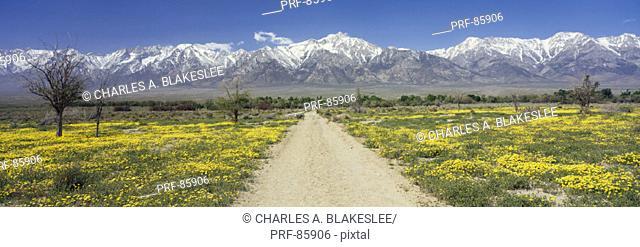 Road Through Sierra Nevada Mountain Range CA