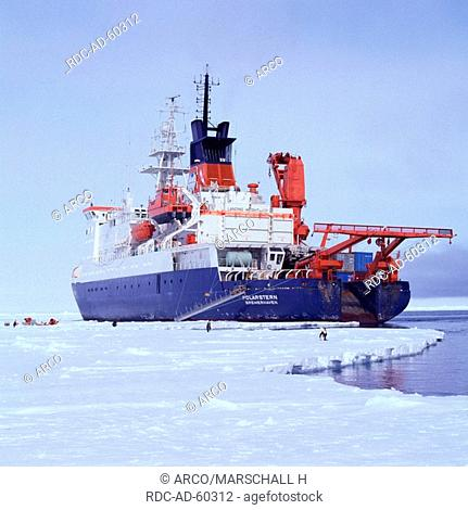 Icebreaker and research ship FS Polarstern and Emperor Penguins in the Weddell Sea, near Georg von Neumayer station, Antarctica, Aptenodytes forsteri